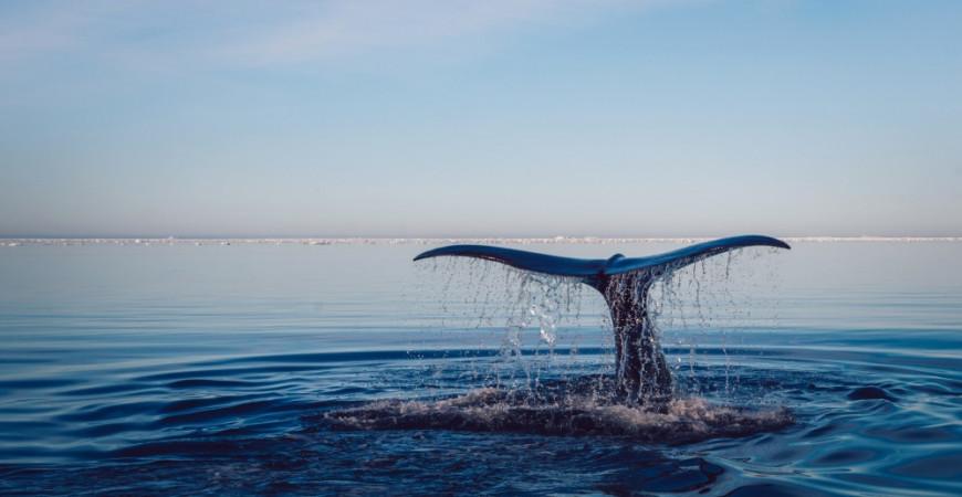 Nouvelle baleine échouée à cause du plastique, le combat continue